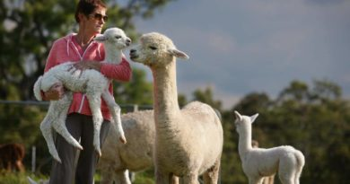 REASONS WHY WE RECOMMEND YOU TO LOOK FOR BABY ALPACA FLEECE