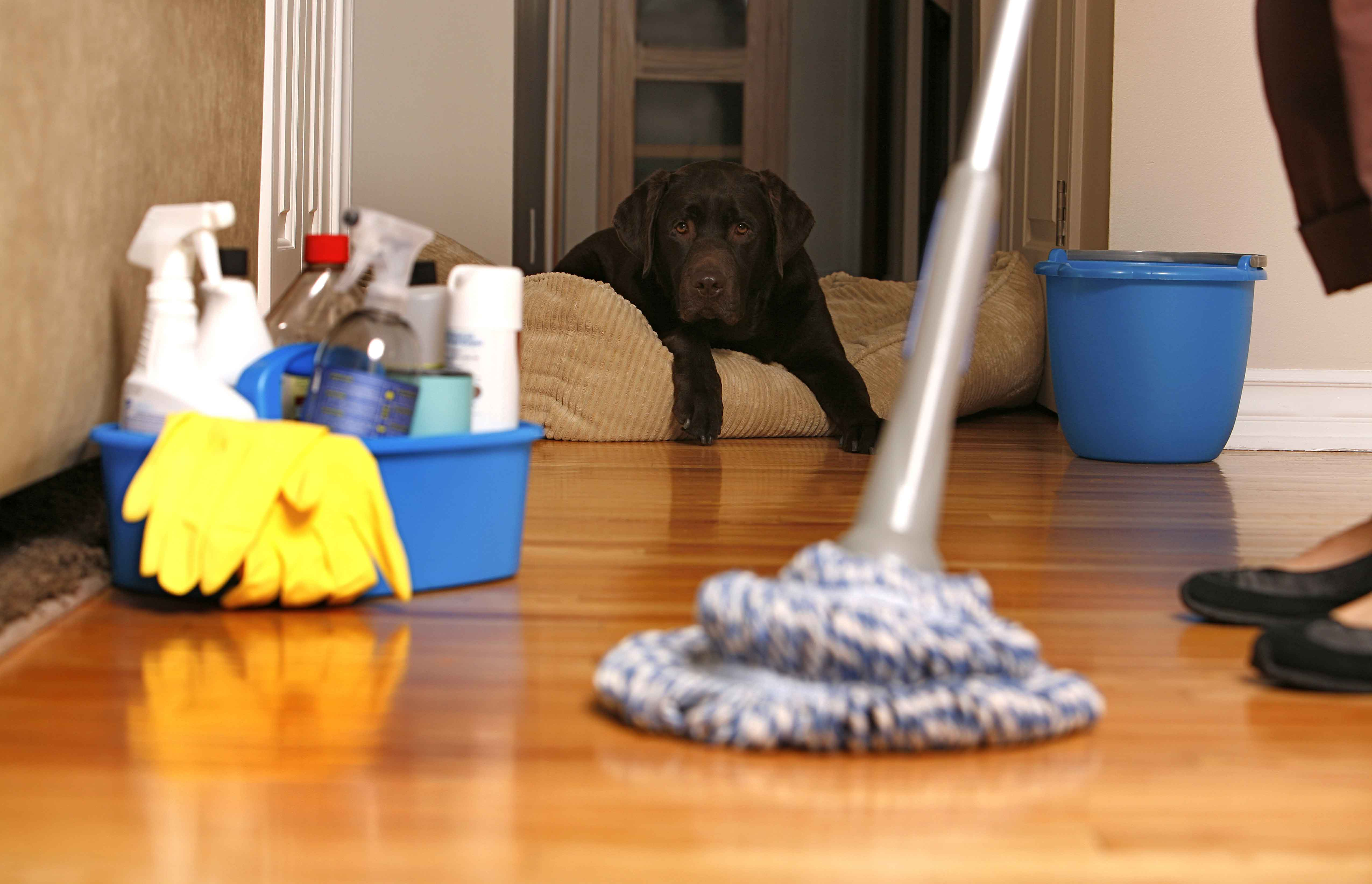 clean house with dog