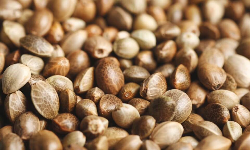 Cannabis seeds for health