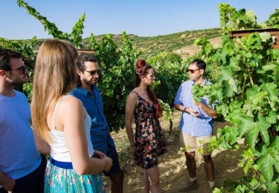 Top 8 Health Benefits of Visiting a Winery